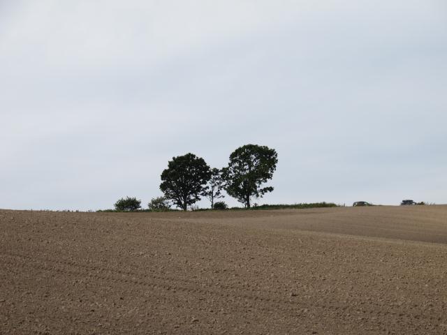 120928_親子の木